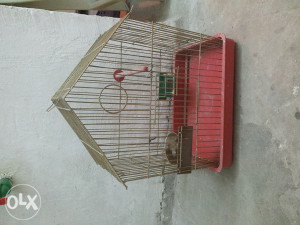 mali kavez