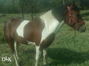 Šareni konj