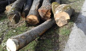 Drva u cutucima preko 20 kubika po 50 km