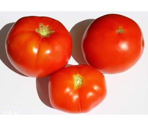 Tres Canthos paradajz