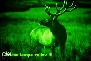 Zelene lampe za lov-kompleti!!