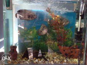 Akvarijum dekoracija