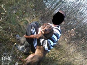 Alpski brak jazavcar, (lovacki psi jazavicar)
