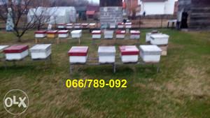 Pčelinja društva - SAMO NA TELEFON!