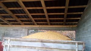 Prodaja Kukuruza 2020