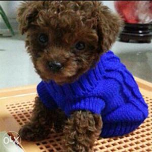 Odjeca za male pse ili macke. Ruzicasta i plava dostupn
