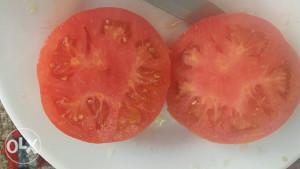 Jabučar paradajz