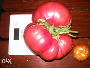 Brandywine Red krupni crveni paradajz