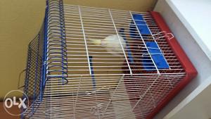 Papagaj Ninfa