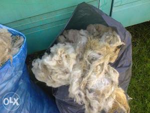 Prodajem ovciju vunu 150kg