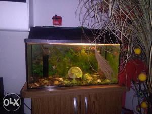 akvari i ribice
