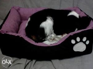 Krevet  lazaljka  korpa za pse