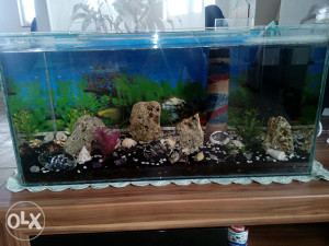 Akvarijumi 80l komplet za oprema