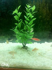 akvarijum akvarij