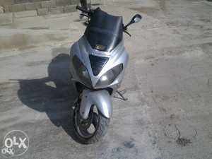 sprint grizzy 125