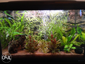 Fabricki akvarijum CAYMAN 75L sa komodom