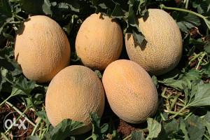 Ananas Dinja