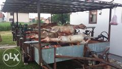 Pecenjara prasici i jagnjici 066/324013