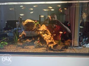 Razne ribice
