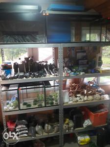 Akvarijumi i oprema